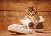 Cute kitten sitting in a shoe