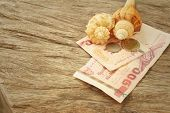 image of conch  - Conch with money of Thai Bath on background of wooden - JPG