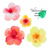 picture of hibiscus  - Set of watercolor hibiscus flowers isolated on white background vector illustration - JPG