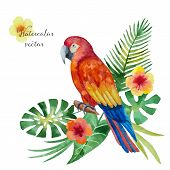 picture of jungle flowers  - Watercolor parrot exotic flowers and leaves isolated on white background vector illustration - JPG