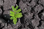 stock photo of drought  - Young plant is prepared for planting on drought land - JPG
