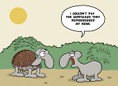 foto of tortoise  - Funny cartoon about tortoise shell and mortgage - JPG