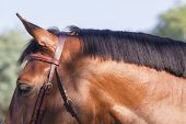 image of pony  - Horse pony portrait head neck groomed  closeup detail colors - JPG