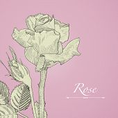 foto of rose bud  - Hand drawn vector blomming rose with bud - JPG