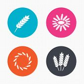 stock photo of corn stalk  - Circle buttons - JPG