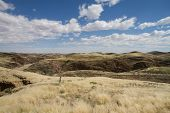 picture of dry grass  - A namibian landscape with hills and dried grass - JPG