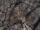 Tree Rings In Old Stump