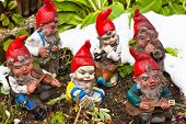 garden gnomes in a garden