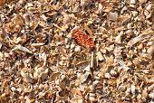 Corn Threshing Waste