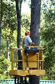 Climbing High To Trim The Trees