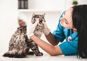 Young Veterinarian Woman In Vet Clinic Inspect Nice Cute Cat. Inspection Of Animal From Veterinarian poster