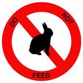 Forbidden rabbit