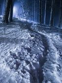 Night Winter Forest With Footpath In Snow poster