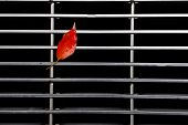 The red leaves on the steel mesh.