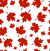 Pattern From Maple Leaves. Red Maple Leaves On A White Background. A Background By Day Of Canada. poster