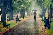 Rainy Day In The Park. Man Walking With Umbrella Under The Rain. Rain In The Park. Rainy Day In The  poster