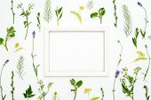 Herbal Botany Decorative Background With A Frame, Flat Lay Composition, Space For A Text poster