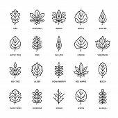 Autumn Leaves Flat Line Icons. Leaf Types, Rowan, Birch Tree, Maple, Chestnut, Oak, Cedar Pine, Lind poster