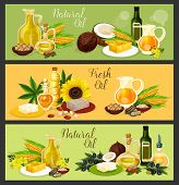 Natural Oil Banner Set With Fresh Plant Seed, Fruit, Flower And Leaf Ingredient. Olive, Sunflower An poster