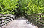 Wood bridge leading into woods