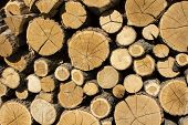 Stacked Logs Background. Stacked Logs Background. Wood Texture Or Wood Background. Wood For Interior poster