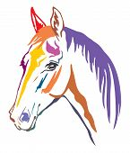 Colorful Decorative Contour Portrait Of Beautiful Horse With Long Mane, Looking  In Profile. Vector  poster
