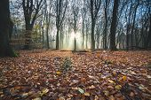 Misty Sunbeams With Sunburst Over Woodland Covered With Colorful Autumnal Leaves poster