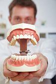 Dentista mostrando modelo de dentes aberta em seu escritório de grandes dimensões