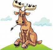 Resting dull moose
