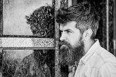 Beard Grooming. Beard Care. Masculinity And Manliness. Man Attractive Bearded Hipster Posing Outdoor poster