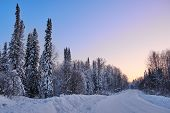 Winter Landscape. Road Through The Evening Snowy Forest. At The Edges, Spruce And Birch Are Covered  poster
