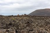 View At Volcanic Landscape In Timanfaya Nationalpark On Canary Island Lanzarote, Spain With Lava Fie poster