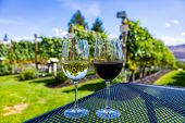Wine Glasses Close Up Selective Focus, Modern Table Sitting On Winery Vineyard Grapevines View Backg poster
