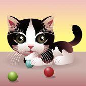 baby Animal Sammlung: Kätzchen