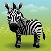 Baby Animal Collection: Zebra poster