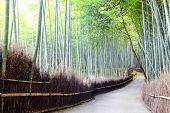 Arashiyama Bamboo trails, Japan