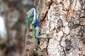 stock photo of tuatara  - the chameleon on a Tree It looks relaxation - JPG