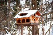 Luxurious Bird House At Wintertime