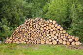 Wood Stacked For Drying In The Woodpile