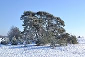 Snow on the Kootwijkerzand.