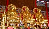 Three Golden Statue Of Buddha