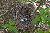 Panasonic Nest