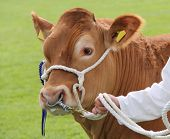 Brown Farm Bull.
