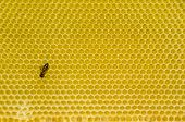 Honeycomb Pattern With Bee