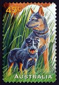 Postage Stamp Australia 1996 Dog And Puppy, Pets