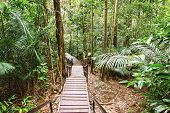 stock photo of canopy  - Canopy walk in the rainforest - JPG