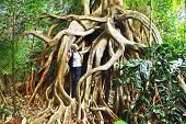 Tropical gigantic tree.