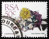 Postage Stamp South Africa 1988 Karoo Rose, Succulent Plant