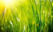stock photo of grassland  - Grass - JPG