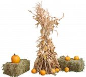 pic of hay bale  - corn stalks - JPG